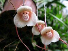 lovely flowers are same monkeys