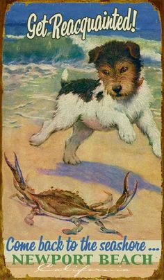 Dog/Crab Buddies -Beach house Sign Mermaids, Surfing, Beach-Related Signs - Vintage Beach Signs by Meissenburg Designs. Poster Ads, Advertising Poster, Poster Prints, Vintage Travel Posters, Vintage Postcards, Vintage Beach Signs, Retro, Travel Ads, Travel Photos