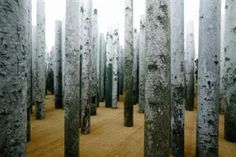 abbas kiarostami forest without leaves - Google Search