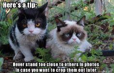 Grumpy Cat vs. Pokey #GrumpyCat #meme For more Grumpy Cat and Pokey quote, humor and meme visit www.pinterest.com/erikakaisersot