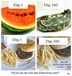 Bakterierna äter inte hamburgaren som sparats i 180 dagar. Insekterna har inte ens brytt sig om hamburgarna fast de legat så länge. Vi äter det!