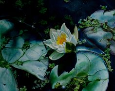 """Lily Pond with Lily"", oil on deep edged canvas, 2008"