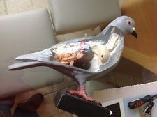 Anatomical model of a racing pigeon huge 18 inches tall very rare vetinary