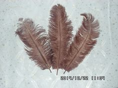 100pcs brun panache de plumes d'autruche pour centres de mariage,