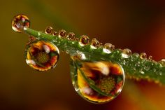 """Surely, some of these photos look too incredible to believe? Valentine says, """"The only thing I do in many of the water drop shots is focus stacking which allows me to get greater DOF (depth of field). The images in the dewdrops are not photoshopped in, they are normally real flowers placed behind the dewdrops or more rarely pictures of something placed behind the dewdrops. The drops act as a wide angle lenses."""""""