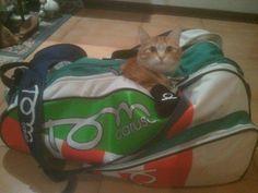 #tomcaruso #bag #cat