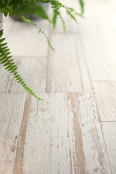 How realistic is our brand new 'Skandi' porcelain? Available in unusual large format squares or the more traditional plank format and various shades including 'Skandi White' shown here. Pretty cool we reckon, who needs real wood flooring? Wood Look Tile Floor, Wood Tile Floors, Bathroom Floor Tiles, Wall And Floor Tiles, Wall Tile, Bathroom Fixtures, Hardwood Floors, White Porcelain Tile, Mandarin Stone