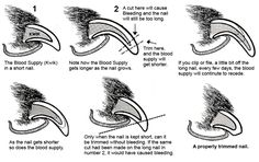 The No Fear Way To Trim Your Dogs Nails   **Video: Dog Aggressive Toenail Trim**   This actually works, we did it tonite and literally in about 5 mins his front nails were trimmed (although definitely recommend a high-value treat)   - helpful tip on how to trim black nails