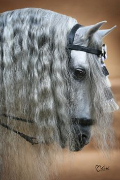 great looking mane - doma vaquera - http://cheriprill.smugmug.com/