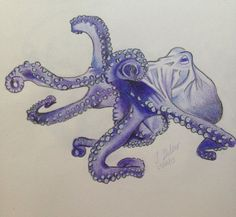 Octopus (Coloured Pencil)