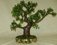 Miniature Tree in a Planter how to