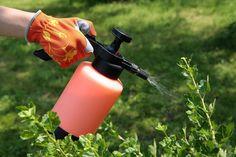 Пик работ на огороде оставляет мало времени на садовые заботы, а здесь время упускать нельзя. Если количество вредителей уйдет за порог эпифитотийного, то борьба может закончиться поражением хозяина сада.