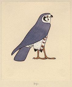 """Howard Carter's watercolours of falcon, Specfic site in Egypt not know. Published in """"Treasures of Tutankhamun"""" check for pinned naturalist painting by Carter of falcon"""