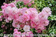 Sommer 2016 Urlaub 201 Nancy Lorraine, Saint, Roses, Summer 2016, Pink, Rose
