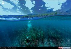 Diving  in Maluku - Indonesia at Capepaperu Resort & Spa