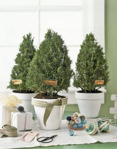 Creative indoor plants decors for Christmas