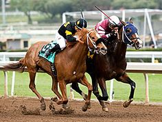 Lost Bus(2012)Bring THe Heat- Frysland By Stravinsky. Terry Lovingier's Lost Bus provided a 64-1 stunner in the $200,000 Santa Monica Stakes (gr. II) Jan. 23, 2016 at Santa Anita Park. Lost Bus paid $131.20, $42.20, and $14.80 across the board on $2 bets.
