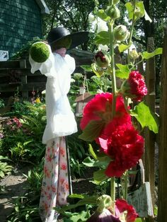 The farm garden scarecrow  lady is highlighted with double red hollyhocks today -