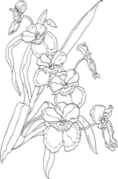 Miltonia Pansy Orchid Coloring page