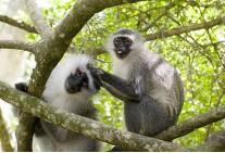 Monkeyland is the worlds first free roaming multi-specie primate sanctuary. Eco-tourism child friendly activity, educating visitors on wildlife conservation Wildlife Conservation, Family Adventure, Primates, South Africa, Tourism, African, Animals, Turismo, Animales