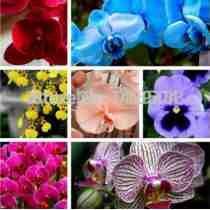 10 Sementes Orquídea Butterfly Flor Exótica E Rara