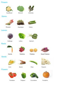 flower lesson plans | Farm Lesson Plan, Parts of the Plant we use for food