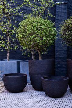 Terrace Garden, Garden Planters, Planter Pots, Minimalist Garden, Inside Plants, Pot Plante, Ceramic Planters, Hedges, Bonsai