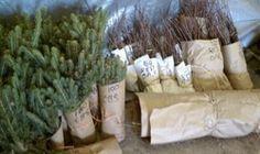 Tree sales, spruces, native plants, pollinators