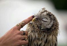 Sleepy baby owl ✿⊱╮