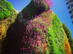 A section of the brightly coloured living wall at Edgware Road Tube Station