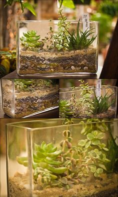 Terrarium Ideas Book - Slideshow from Gardener's Supply create a mild woodland setting, display miniature tropicalS or design a lovable fairy garden using plants, curios and found objects, such as pebbles and sea glass. Cactus Terrarium, Mini Terrarium, Garden Terrarium, Garden Plants, House Plants, Paludarium, Vivarium, Air Plants, Indoor Plants