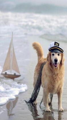 Captain Dog iphone 5 wallpaper