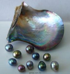 Pteria sterna pearls