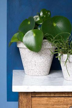 MY ATTIC voor vtwonen / diy bloempotten beton look / planten / plants / blue wall    Fotografie: Marij Hessel Plant Aesthetic, Plant Wall, Diy Home Improvement, Green Plants, Blue Walls, Indoor Plants, Greenery, Diys, Planter Pots