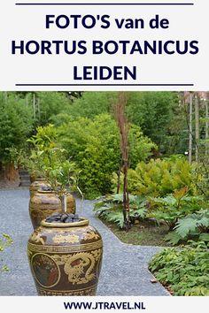 In Leiden is de oudste nog bestaande botanische tuin van Nederland te bezoeken. Er zijn kassen met orchideeën, de reuzenwaterlelie, varens, tropische planten, een Chinese Kruidentuin, de Clusiustuin, de varentuin, de bollentuin, de Von Siebold Gedenktuin en systeemtuinen te zien. Mijn foto's van deze Hortus zie je hier. Kijk je mee? #hortus #leiden #jtravel #jtravelblog #fotos