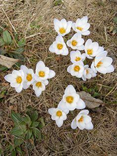 Die Blumen erobern die Bergwiesen und kündigen den Sommer an. Freuen wir uns auf Natur pur!   www.hotelauszeit.ch www.facebook.com/hotelauszeit www.instagram.com/hotelauszeit