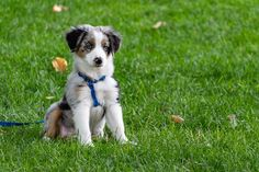 With dog pet health insurance companies, you can be sure that your dog's health is in a very good place. Here the best dog insurance companies! Dog Collar With Name, Dog Collar Tags, Baby Dogs, Pet Dogs, Pets, Custom Dog Collars, Dog Insurance, Insurance Companies, Tips