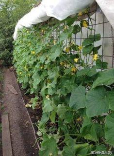 pe spalier, in partea de nord inchidem piata Garden Trellis, Herb Garden, Garden Beds, Farm Gardens, Outdoor Gardens, Summer House Garden, Vegetable Garden Design, Plantar, Edible Garden