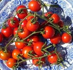 best plum shaped tomatoes recipe on pinterest