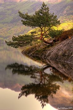 Rowardennan Scots Pine Bonsai on Loch Lomond, Scotland; photo by .Karl Williams