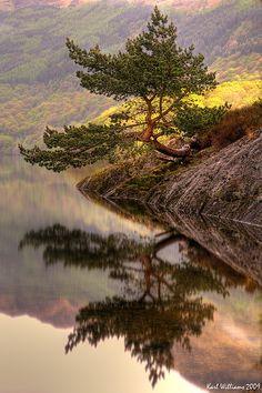 Rowardennan Scots Pine Bonsai on Loch Lomond, Scotland; photo by .Karl Williams