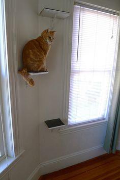 DIY cat perches by foxflat, i want these for ottie Crazy Cat Lady, Crazy Cats, Diy Litter Box, Cat Bedroom, Cat Perch, Cat Shelves, Shelving, Cat Condo, Cat Behavior