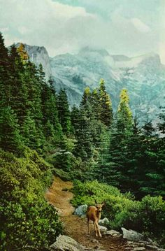 photography. sequoia national park. national geographic, 1959.