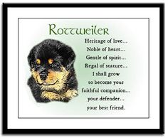Michael was one of the best dogs we ever had, sadly he is gone, but miss him still.  Rottweilers are wonderful dogs.
