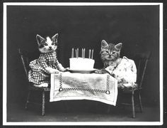 vintage everyday: Early Photographs of Animals in Human Situations from the 1910s