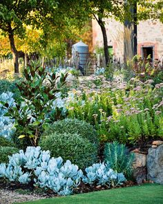 Drought-hardy succulents clipped shrubs and a teddy bear magnolia tree fill the garden beds at an Adelaide property Photography Claire Takacs # Dry Garden, Garden Shrubs, Garden Beds, Fruit Garden, Small Garden Bed Ideas, Country Garden Ideas, Rocks Garden, Garden Compost, Home And Garden