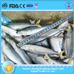 Wholesale Price Frozen Round Scad Mackerel fish/yellowstripe scad.