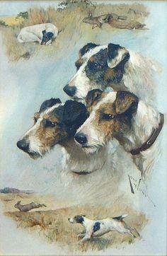 3 foxterriers