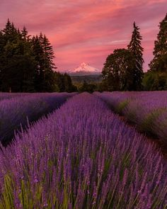 Mount Hood - Oregon