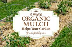 Organic Gardening Some benefits from using organic mulch in your vegetable garden include weed suppression, moisture retention, and soil enrichment as it decomposes. Garden Mulch, Backyard Vegetable Gardens, Garden Pests, Garden Fertilizers, Fall Vegetables To Plant, Organic Vegetables, Gardening Vegetables, Organic Mulch, Organic Gardening Tips
